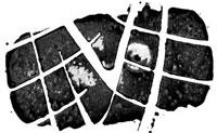 Тестирование покрышки для лета: управляемость на мокром и сухом покрытии Toyo Proxes R1R 225/45/17 Car and Driver 2012